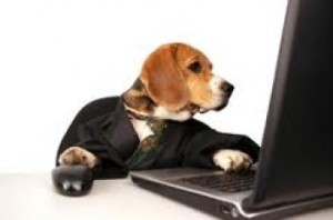 cute dog browsing the internet